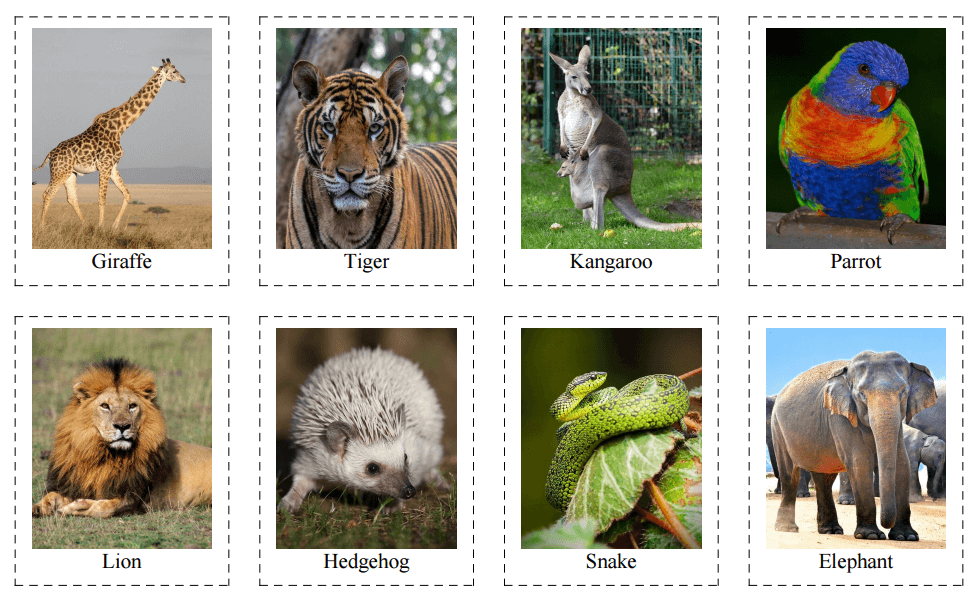 40 Flashcards of Wild Animals