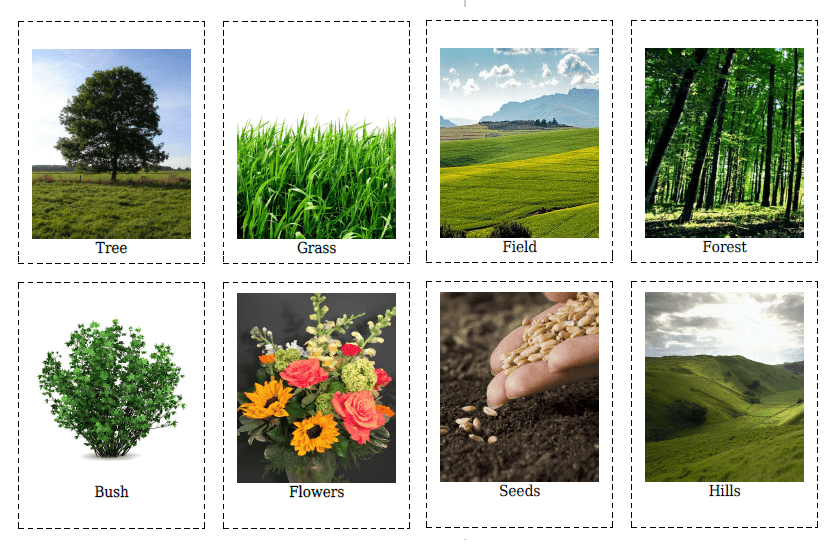 20 Flashcards of Plants